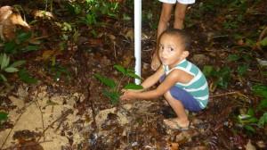 Amazonas Reisen Pflanzungsprojekt